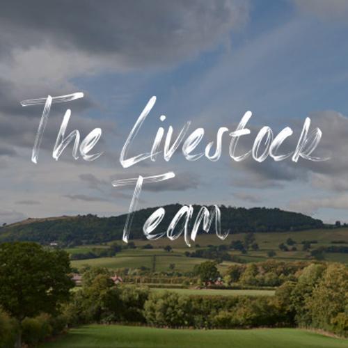 the-livestock-team